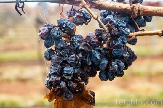 04-grapes-2