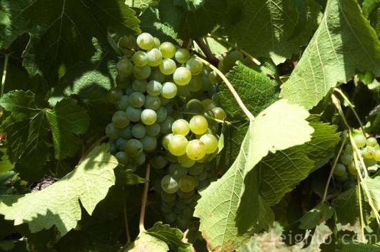 04-grapes